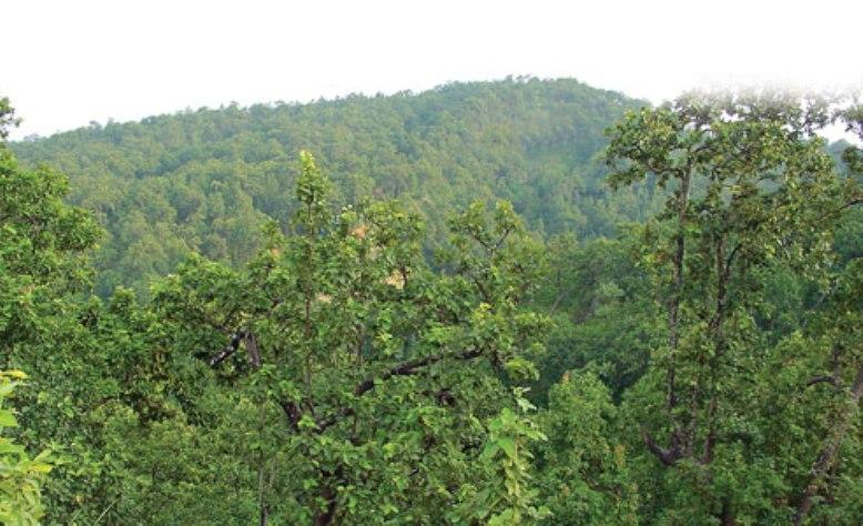सामुदायिक वन